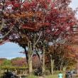 名古屋の紅葉をまわる