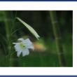 竹林の妖精