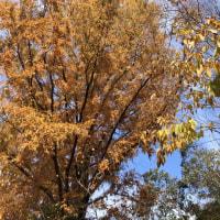 秋真っ盛り、山も我が家の庭も、、、