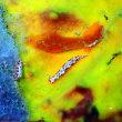 チンアナゴの日。 沖縄ダイビング 那覇シーマリン