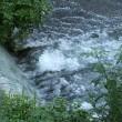 8月17日、水滴付きの花と、鳩と、水の流れ