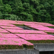 屋根全体がピンク色!