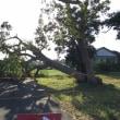 台風で木が倒れた!