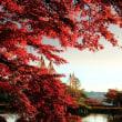 秋色兼六園 金沢市内紅葉の真打