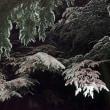 ★シーズン初の積雪はビビる 🍎老爺柿 2018