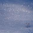 冬の清らかな白い世界