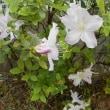 四月の庭の目立つ花