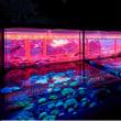 アートアクアリウム展と水槽メンテナンス