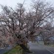 桜西038 松尾橋 西詰