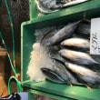 田尻漁業協同組合日曜朝市 雨で不良