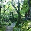 「常寂光寺」〜藤原定家の和歌の世界に浸れる、青紅葉と苔のコラボが最高に素晴らしいお寺🌠