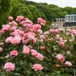 須磨離宮公園の花しょうぶ