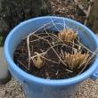 バケツで田植え…🌾 Part7