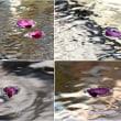 デジブック 「花のワルツagein」