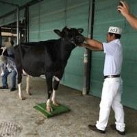 平成30年度宮城県総合畜産共進会―乳用牛の部―第5・6区で最優秀賞を獲得!