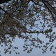 葉桜。。。