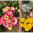 花が満開~「緑花センター」