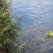 本日、8月17日 紀の川にて黄泉送り修法を