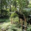 鎌倉の苔むす「松葉谷 妙法寺」。
