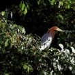 珍しい野鳥