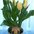 カネノナルキ・・・・・やっとやっと花芽が・・・・・♪