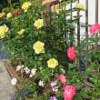 きょうの庭