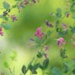 バタフライガーデンでひっそりと咲く 萩の花