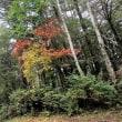 富士山の今年の紅葉をお楽しみ下さい!