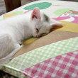 座布団で寝てるところニャう。