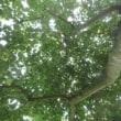 草刈りに挑戦 木影の涼しさに居座る