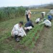 農研、秋冬野菜の管理・夏秋野菜の管理と収穫