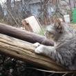 【 梅と猫と乳母車 】