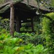 初秋の東慶寺