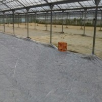 太陽熱土壌消毒