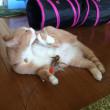 猫を飼うには寝不足を覚悟?【猫日記こむぎ&だいず】2017.09.20