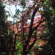 公園の紅葉始まる