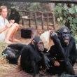 ジェーン・グドール Jane Goodall