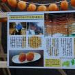 銀座にて あんぽ柿の巻