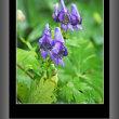 六甲高山植物園の花 その2