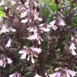 今朝もいろいろ咲いています