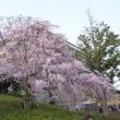 嵐が吹き荒れたりもしたけれど、桜咲く~新しい生活・ご縁