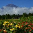 南麓富士山