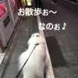 梅雨の合間の下ふ北沢散歩