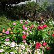 くさいっぱい、花いっぱい