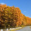 尊い秋の輝き その2