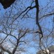 出先の街の花;金の生る木&オニタビラコ 他