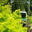 新緑のトンネル:叡山電車
