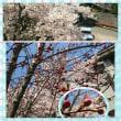 春を通り越して、もう夏なの!?