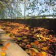 秋の深まりを感じるこの頃です。朝晩の風はちょっぴりと冷たく~
