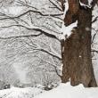 如月の雪。